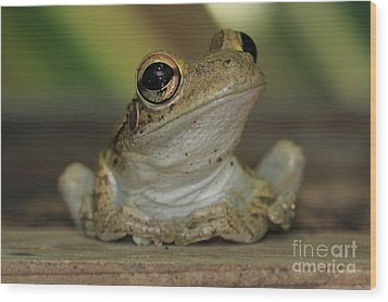Let's Talk - Cuban Treefrog Wood Print