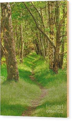 Lets Walk Along The Sunlit Woodland Path Wood Print by John Kelly