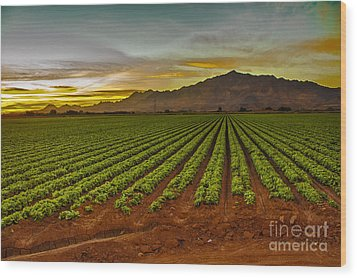 Lettuce Sunrise Wood Print by Robert Bales