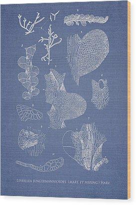 Leveillea Jungermannioides Wood Print by Aged Pixel