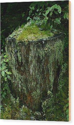 Lichen And Moss Covered Stump Wood Print by Amanda Holmes Tzafrir
