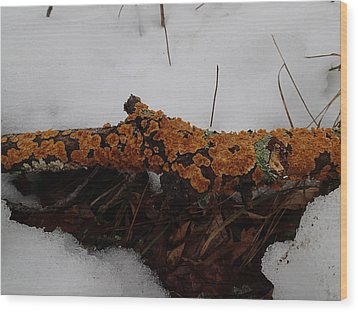 Wood Print featuring the photograph Lichen N'snow by Robert Nickologianis