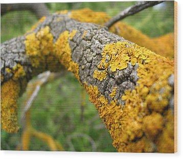 Lichen On Branch Wood Print