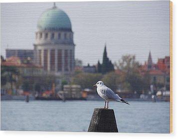 Lido Gull Wood Print