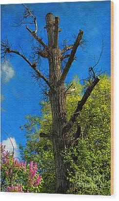 Life And Death Wood Print by Mariola Bitner