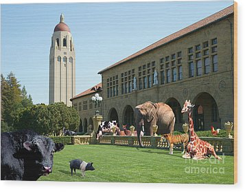Life Down On The Farm Stanford University California Dsc685 Wood Print by Wingsdomain Art and Photography