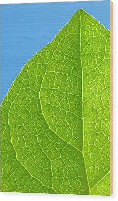 Life Of A Leaf Wood Print by Joan Herwig