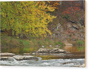 Life On The River Wood Print by Bill Wakeley