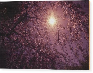Light And Cherry Blossoms Wood Print by Vivienne Gucwa