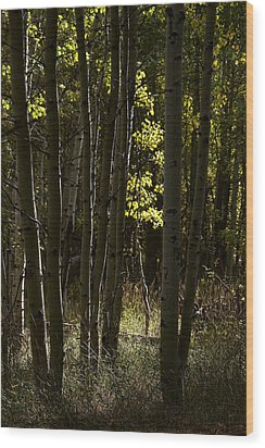 Light And  Shadows D0468 Wood Print by Wes and Dotty Weber