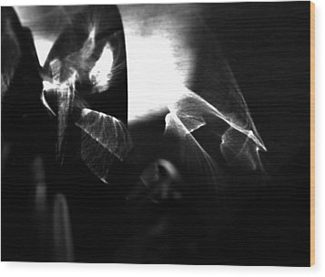 Light Filtering In Wood Print by Tara Miller