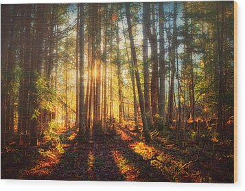 Light In The Forest Wood Print by Gary Smith