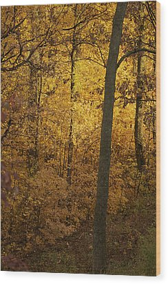 Light In The Forest Wood Print by Jane Eleanor Nicholas