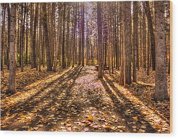 Light In The Forest Wood Print by Jim Sauchyn