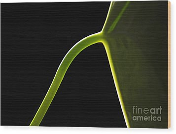 Light Leaf Lines Wood Print by Dan Holm