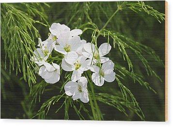 Light Of The White Wood Print
