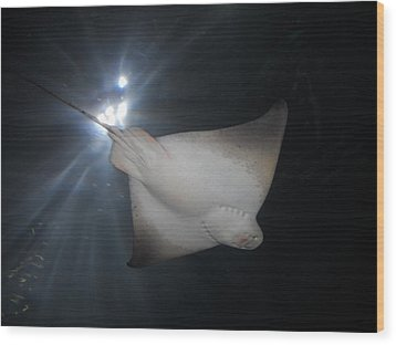 Wood Print featuring the photograph Light Ray by Kristen R Kennedy