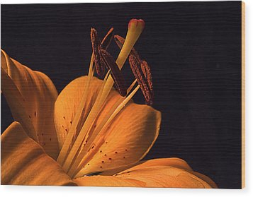 Light Touch Ll Wood Print by Shirley Mitchell