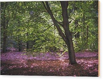 Light Tree In Hoge Veluwe National Park. Netherlands Wood Print by Jenny Rainbow