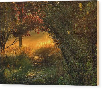 Lighted Path Wood Print by Thomas Young