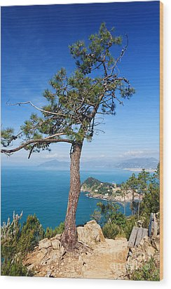 Wood Print featuring the photograph Liguria - Tigullio Gulf by Antonio Scarpi
