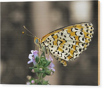 Wood Print featuring the photograph Like A Flying Tiger by Meir Ezrachi