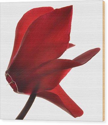 Like A Graceful Bird. Wood Print by Terence Davis
