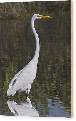 Like A Great Egret Monument Wood Print by John M Bailey