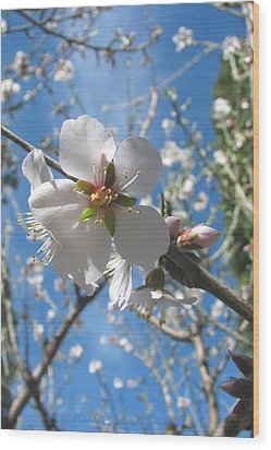 Like Stars In The Sky - Almond Blossoms Of Spring Wood Print by Brooks Garten Hauschild