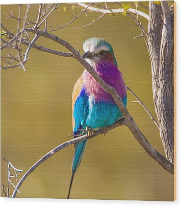 Lilac Breasted Roller Wood Print by Craig Brown