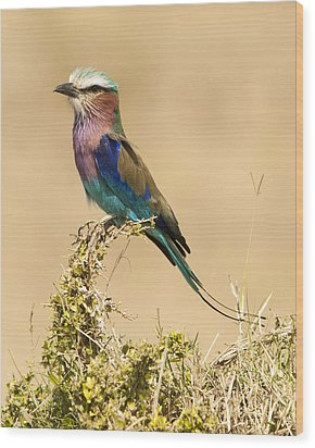 Wood Print featuring the photograph Lilac Breasted Roller by Phyllis Peterson