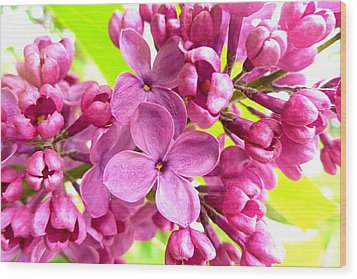 Lilac Closeup Wood Print by The Creative Minds Art and Photography