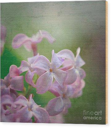 Lilac Dreaming  Wood Print