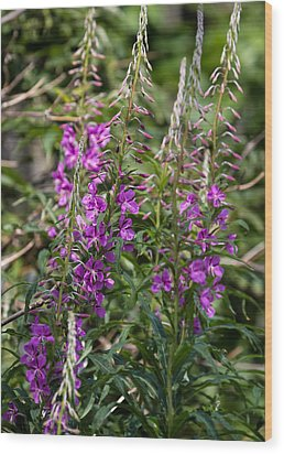 Wood Print featuring the photograph Lilac Flower by Leif Sohlman