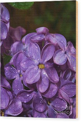 Lilac Flowers Wood Print by AmaS Art