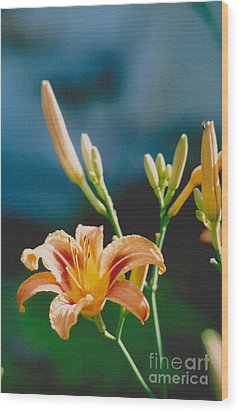 Lilies - 2 Wood Print by Jackie Mueller-Jones