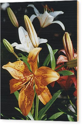 Lilies Assorted Colors Wood Print