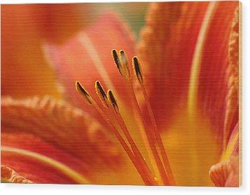 Lilies Heart Wood Print by Edward Loesch