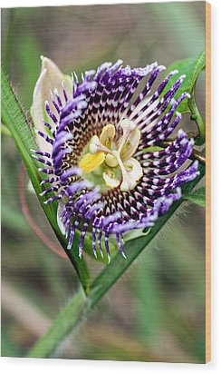 Wood Print featuring the photograph Lilikoi Flower by Dan McManus