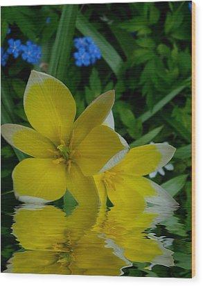 Lilium Of Gold Wood Print by Pepita Selles