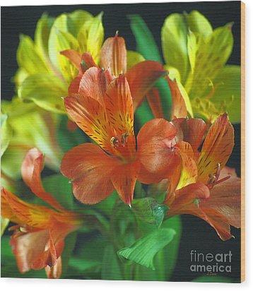Lillies Galore Wood Print by Wobblymol Davis