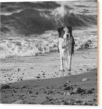 Lilly On The Beach Wood Print