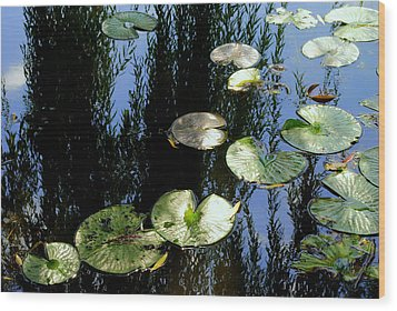 Lilly Pad Reflection Wood Print by Frozen in Time Fine Art Photography