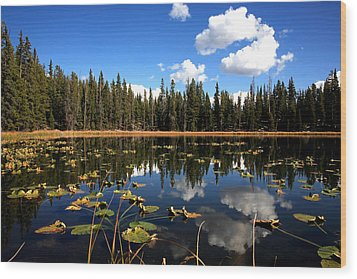 Lilly Pond Wood Print by Darryl Wilkinson