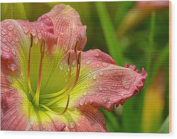 Lily After The Rain Wood Print