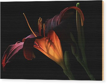 Lily Ambiance Wood Print by Donna Kennedy