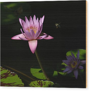 Lily And The Bee Wood Print