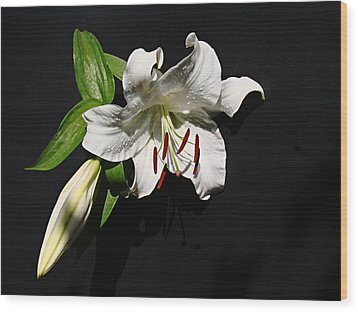Lily At Daybreak Wood Print by Nick Kloepping