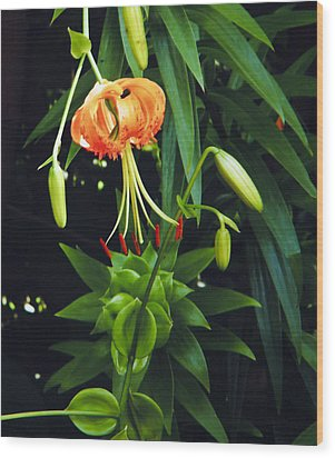Wood Print featuring the photograph Lily Bloom by Debra Crank