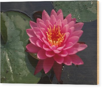 Wood Print featuring the photograph Lily Flower In Bloom by Michael Porchik